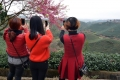 红绿妖娆笑春光(风光片组)