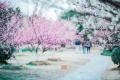 满园皆春色百花争芬芳