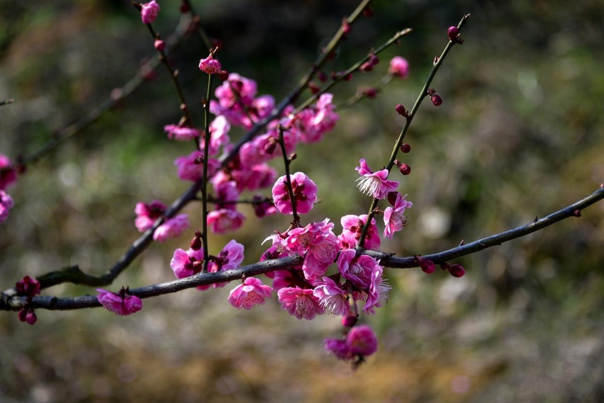 【晚8点红包】春暖花开,快来分享一下庐江赏花好去处吧!