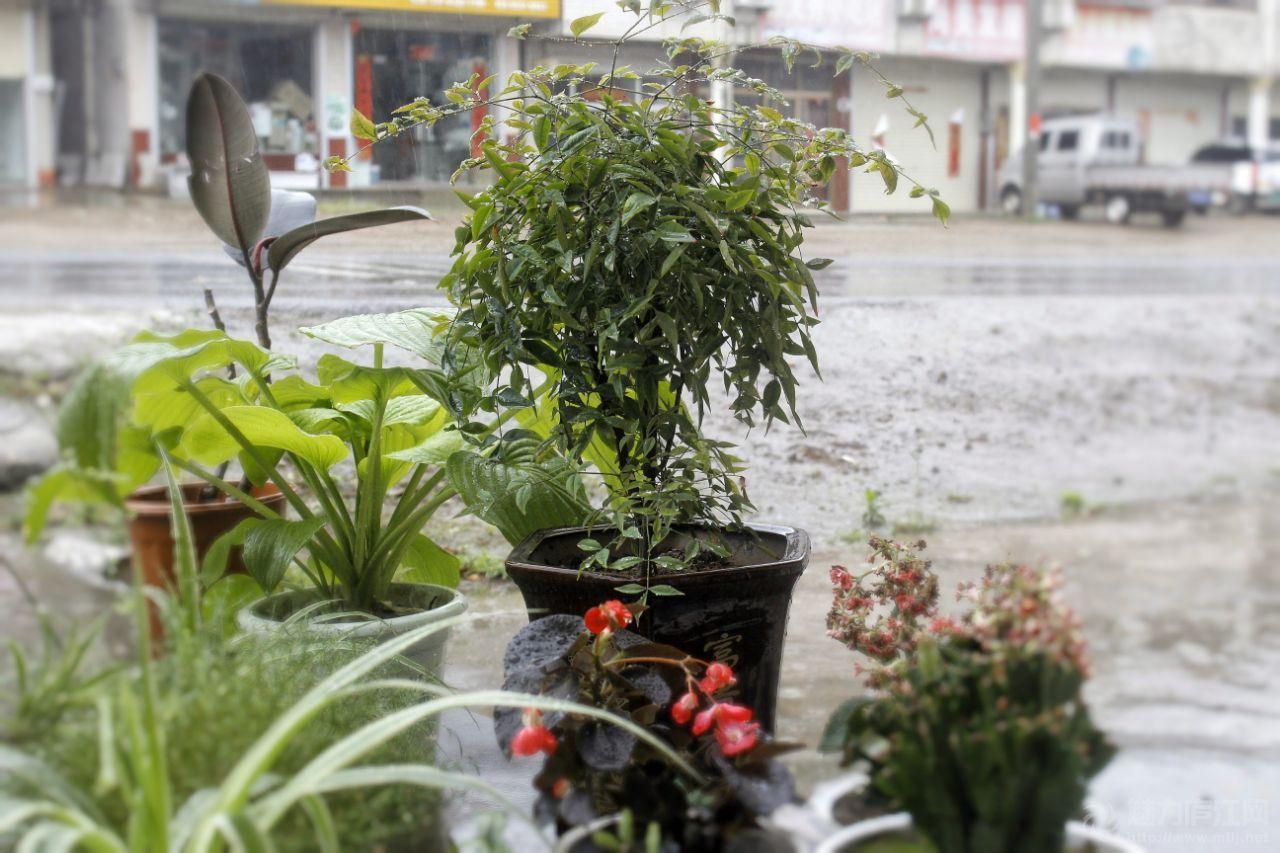 夏天的雨,总是这么任性